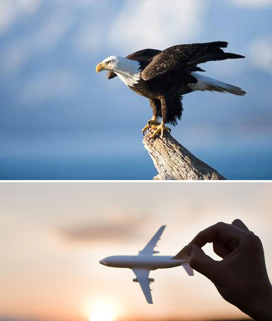 Não Importa O Ninho Quando O Ovo é De águia Cmtejosé